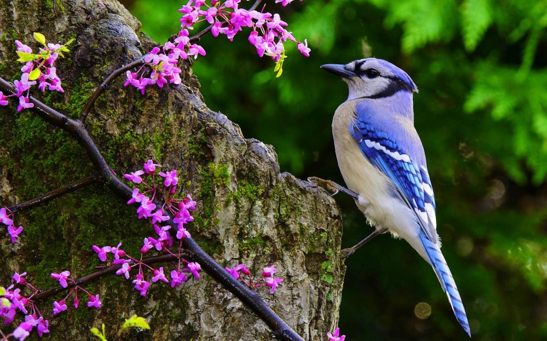 еще птицы на природе красивые идет